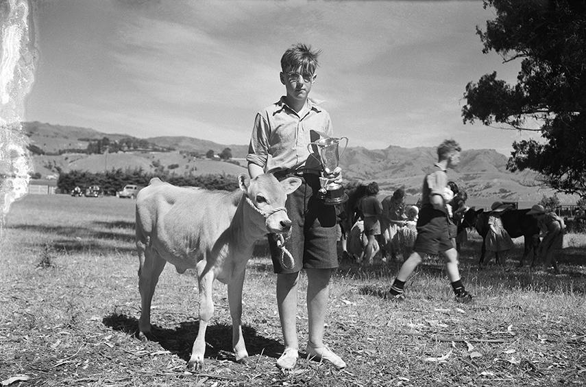 Graham Crotty with his champion calf at calf club, Duvauchel